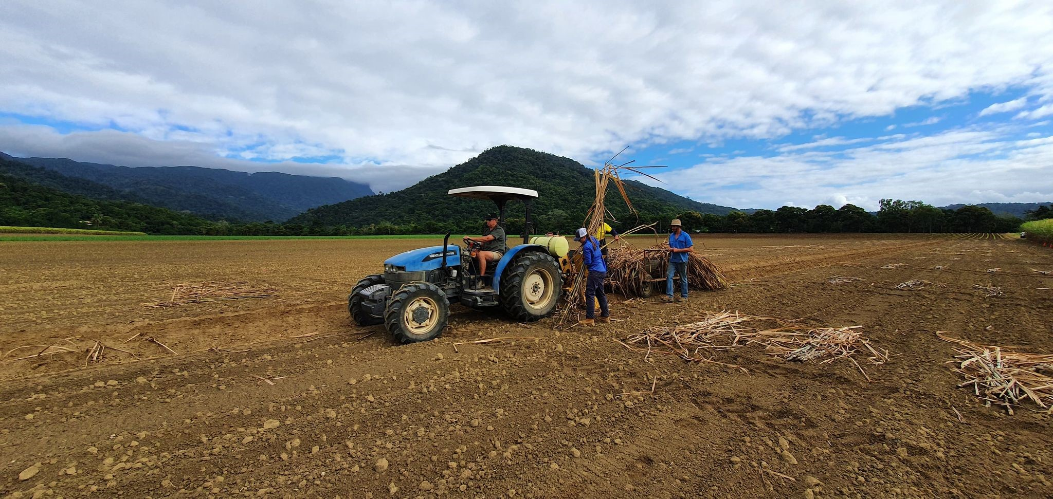 Tractor in field with three men planting sticks of sugar cane