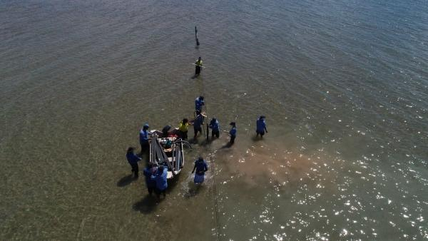 Researchers installing longlines for oysters on Groote Eylandt, NT